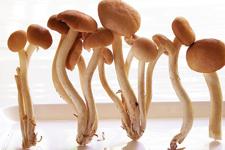 茶树菇的做法