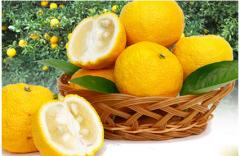 柚子可以榨汁吗 柚子和什么榨汁好喝