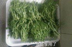 无土栽培豌豆苗的做法