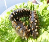 【海参的功效与作用】海参的家常做法_海参的营养价值