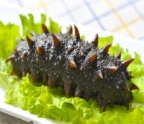 【海参怎么发】海参的家常做法_海参的营养价值