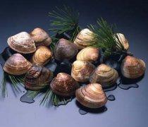 【河蚌怎么洗】河蚌怎么吃_河蚌的做法大全